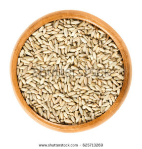 stock-photo-rye-grains-in-wooden-bowl-secale-cereale-grain-cover-and-forage-crop-used-for-flour-bread-625713269